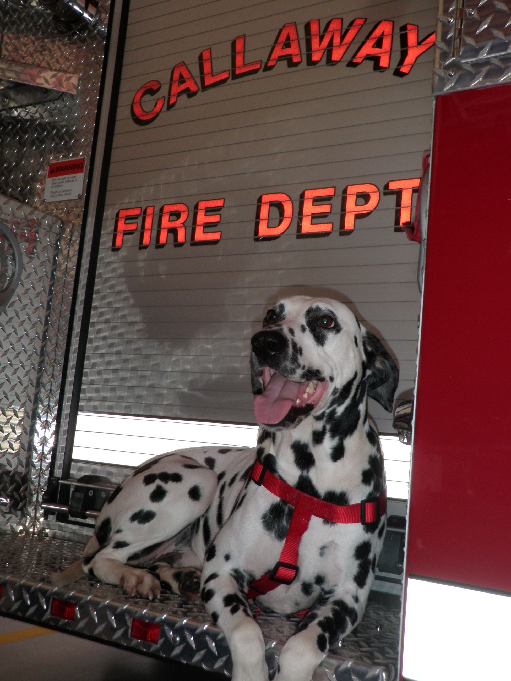 Fire House Dog